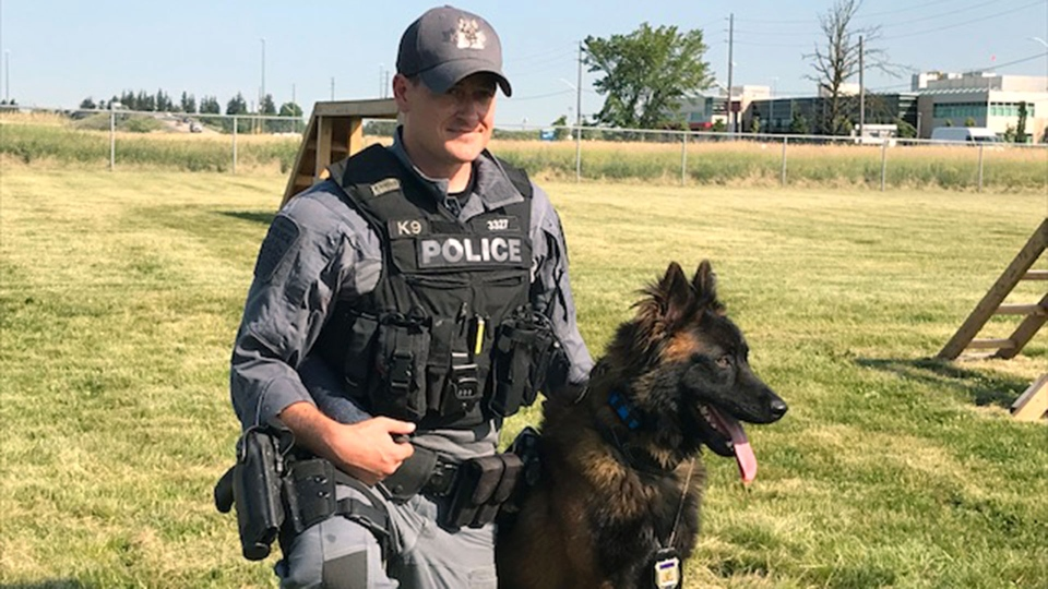 A canine graduation ceremony for Peel Regional Police took place on July 10, 2019. (CTV News Toronto / Ron Dhaliwal)