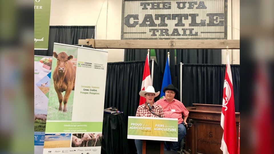 Beef industry to receive $8 3M boost from federal government | CTV News