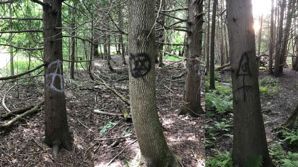 Trail vandalism
