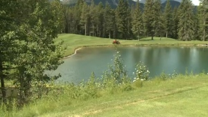 Golf courses in southern Alberta are still closed to the public, Dr. Deena Hinshaw confirmed Thursday. (File)