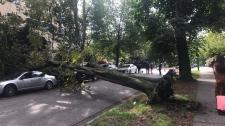 treedown west end