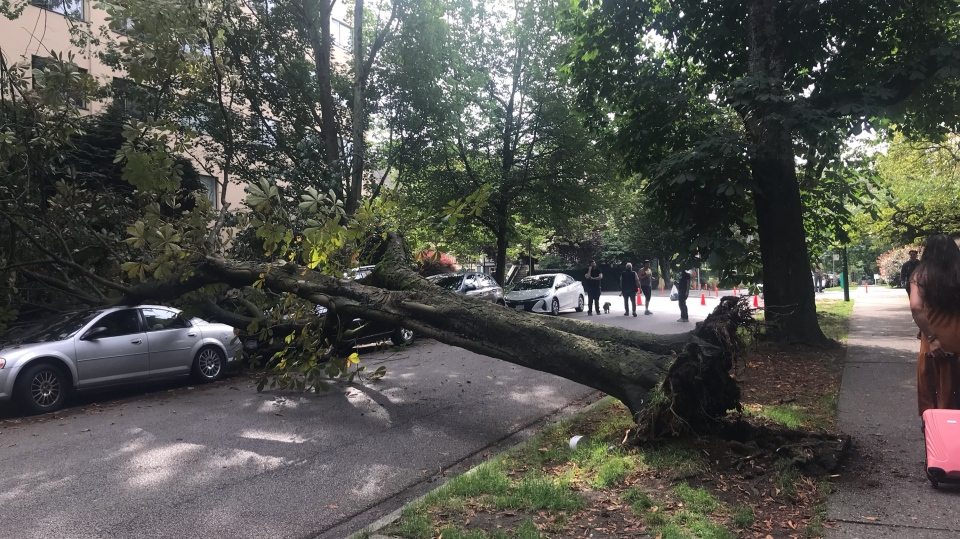 A tree was seen stretched across a West End street on Friday, July 12.