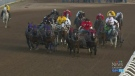Another chuckwagon horse has died and officials ha