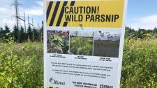 Wild Parsnip Caution signs around South Kanata