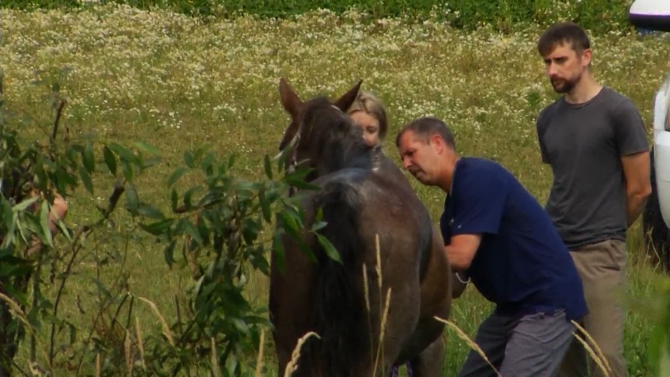 Abbotsford Fire Rescue Service Assistant Chief Craig Bird said the horse was elderly, about 34 years old, and under a lot of stress. (CTV)