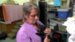 Homeless man rescues kittens