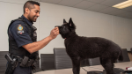 Maya is being trained by her imprinter,  Cst. Sarb Singh (Delta Police/Twitter)