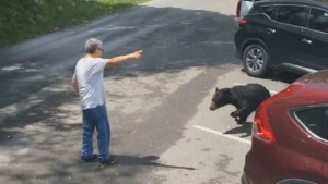 A man at a Tennessee national park got a warning from a mama bear after he got too close to a group of bear cubs. (Storyful/Paige Marple)