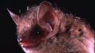 British Columbia man dies from rabies