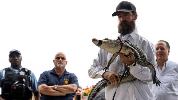 Florida alligator expert Frank Robb