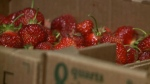 Maritime berry farmers continue to struggle