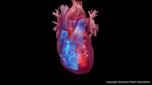 A study published Wednesday in the Journal of the American Heart Association found that one in six people with broken heart syndrome also had cancer, and those with cancer were less likely to report an emotional trigger for their heart symptoms. (American Heart Association)