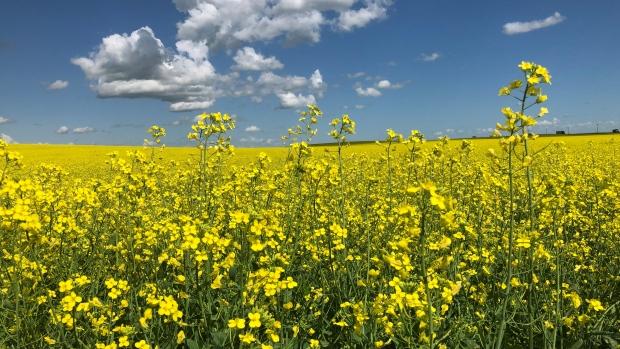 Saskatchewan crops
