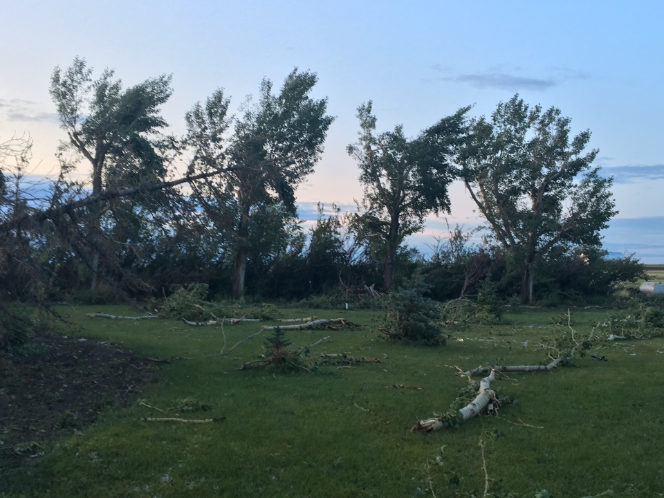 Downed trees following Thursday afternoon's storm that produced a funnel cloud