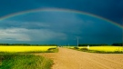 Rainbow over the canola fields in Swan River. Photo by Lisa Cordileone.