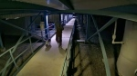 A suspect in a Fortis BC facility break-in and a dog are seen in this security image provided by the RCMP.