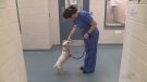 Dog found with severe infections still recovering
