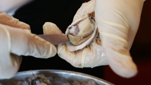 A Pacific oyster is shucked in this June 18, 2010 file photo. (Ted S. Warren / AP)