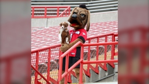 Calgary Stampeders foster puppy