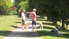 Dogs unleashed in Guelph