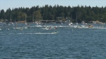 For more than half a century, Nanaimo has been the epicentre of a summer tradition like no other. (CTV)