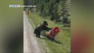 bear Pylon