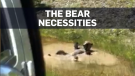 Bear finds convenient spot to cool off in B.C.