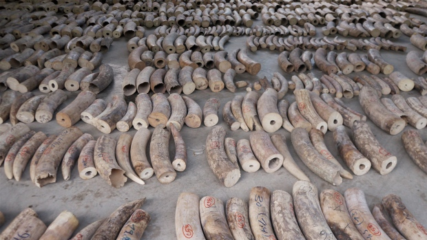 ivory tusks in Singapore