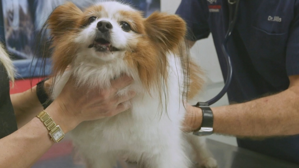 Experts are now sounding the alarm regarding pets being over-prescribed antibiotics. (Consumer Reports.)
