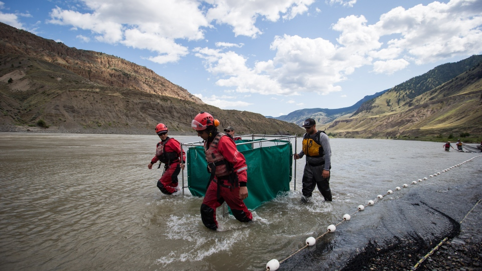 Fisheries and Oceans Canada officials and members of the B.C. Wildfire Service move salmon in a temporary holding pen on the Fraser River before being transported with a helicopter past a massive rock slide, near Big Bar, west of Clinton, B.C., on Wednesday July 24, 2019. (THE CANADIAN PRESS/Darryl Dyck)