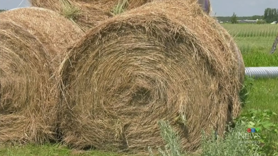 Hay shortage causing havoc for farmers