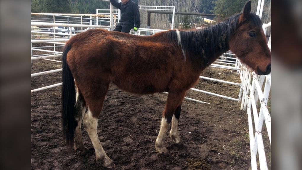 horses seized bc spca