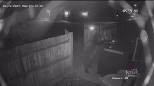 CTV Montreal: Bear drags dumpster