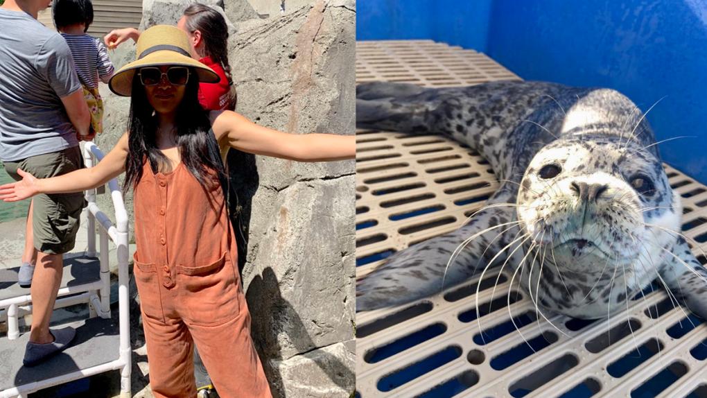 Ali Wong names Vancouver seal pup