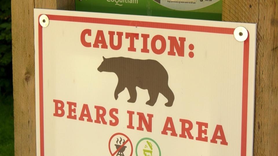 Bear enters Coquitlam home