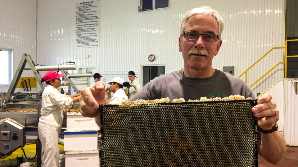 Murray Hannigan holds a tray of honey ready to be collected. Holly Giesbrecht/CTV News