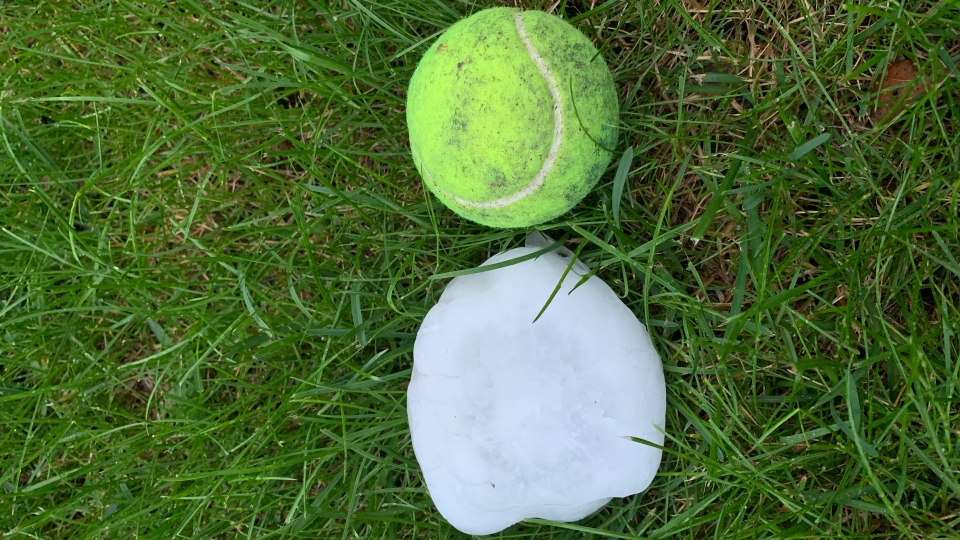 Matea Nadeau from Spruce Grove in Alberta came home Friday night to discover hail stones the size of a tennis ball had dug up her lawn. (Matea Nadeau)