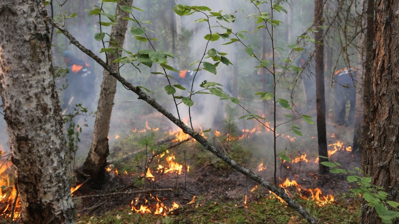 In this photo provided by Ministry of Emergency Situations of Krasnoyarsk Region on Saturday, Aug. 3, 2019, a fire in a forest in Krasnoyarsk Region, Eastern Russia. (Ministry of Emergency Situations of Krasnoyarsk Region via AP)