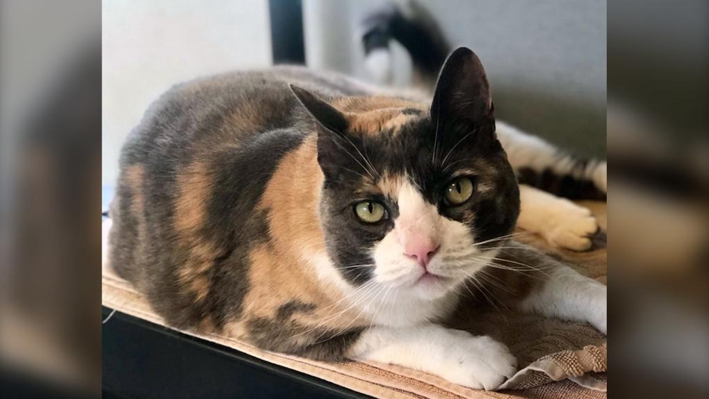Half-price cat adoption event 'a purrfect success,' BC SPCA says