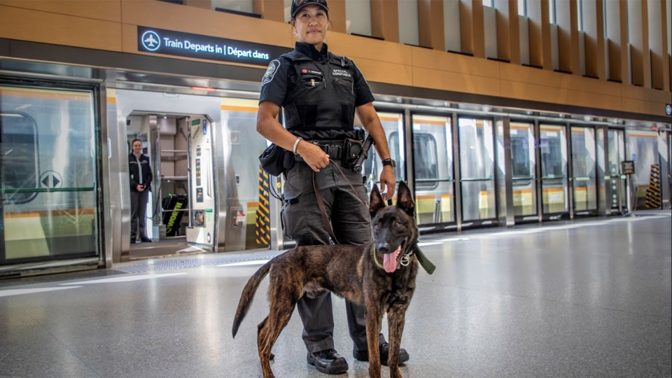 Members of Metrolinx's new canine unit are seen at Toronto's Union Station. (Metrolinx)
