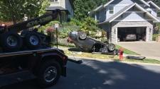 Car bear mountain crash