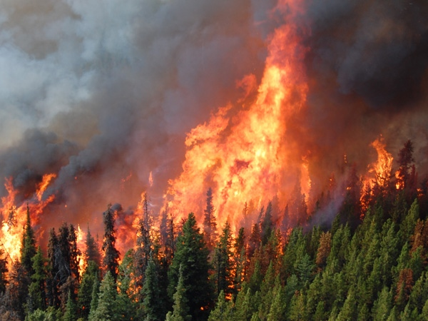 The Kelly Like fire burning near Clinton, B.C., now covers roughly 10,000 hectares of forest land. August 22, 2009. (BC Wildfire Management Branch/Gwen Eamer)