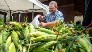 Jacob Rock with Rock's Dairy Farm and Produce in Bristol, Va., loads fresh ears of corn into a bag for a customer at the State Street Farmer'sMarket, Wednesday, July 17, 2019 in downtown Bristol, Tenn.. Along with the other produce brought to the market, Rock had an entire truck bed of fresh corn. (David Crigger / Bristol Herald Courier via AP)