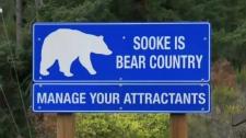 Sooke bear sign