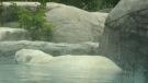 Polar bear habitat invites international help