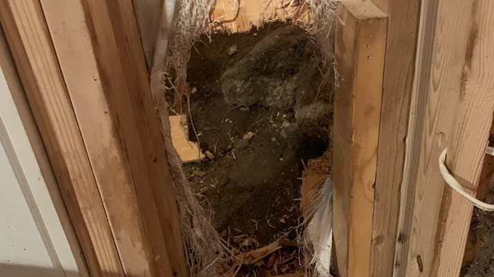A bear broke into a home in Colorado and left by breaking through a wall. (Estes Park Police Department)