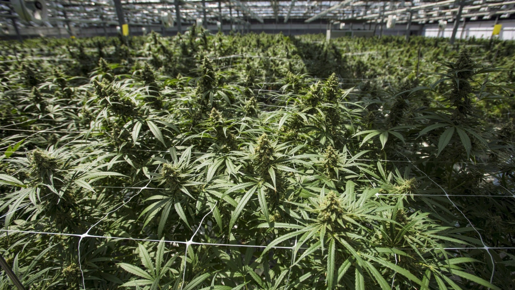 OSC approves management cease trade order at cannabis company CannTrust Holdings