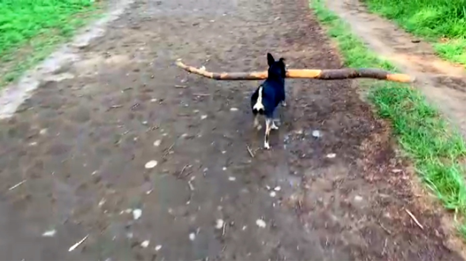 little dog big stick