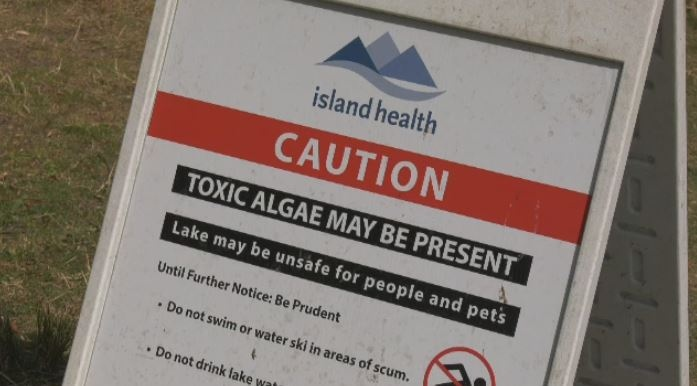 A sandwich board signs warns visitors of toxic blue-green algae at Beaver and Elk Lake. Aug. 13, 2019. (CTV Vancouver Island)