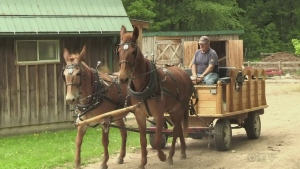 Mules help Waterloo couple find quieter lifestyle